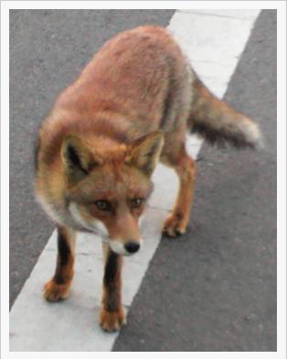 tkyF1_FOX